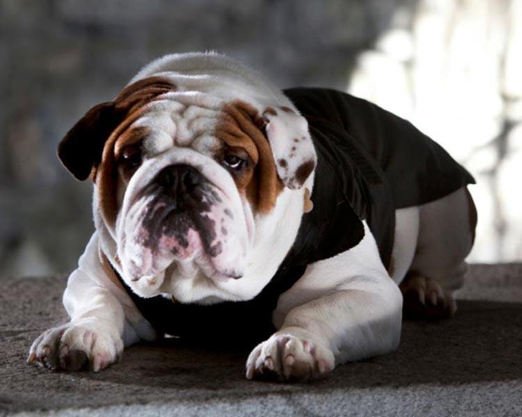 Les chiens procanis votre animalerie nancy pulnoy for Salon chiot nancy