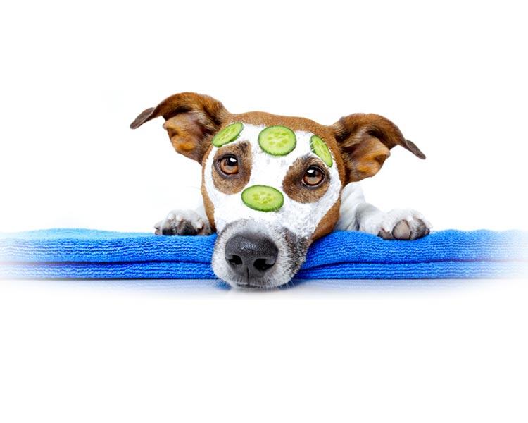 toilettage pour chien et chat chez PPROCANIS