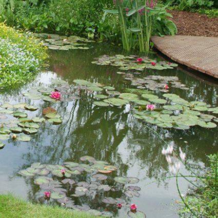 destockage plantes de bassin