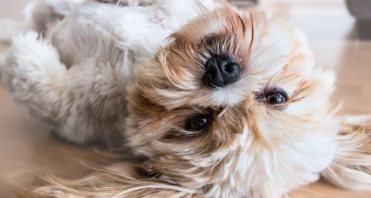 massage canin