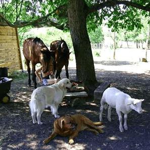 procanis animalerie associations l'arche de fanny forum nancy