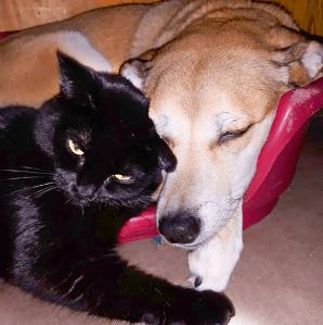 procanis animalerie associations rebrousse poil chat forum nancy